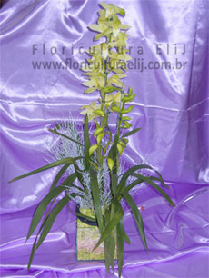 Orquidea simbidium