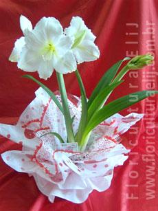 Vaso de Amarilis - Temos também na cor vermelha